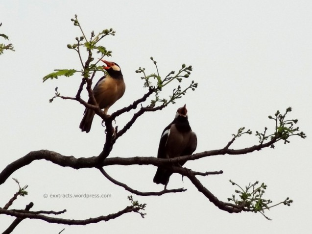 2Thirsty Birds